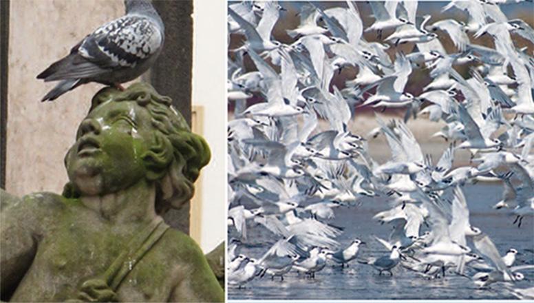 plagas aves urbanas